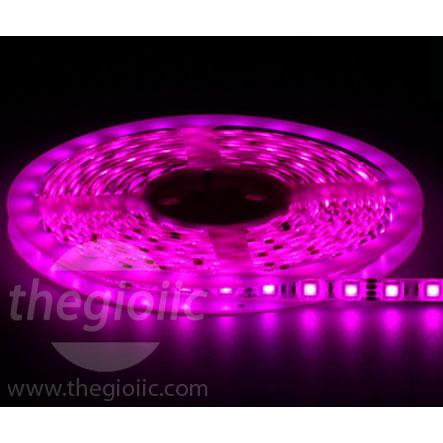LED Dây 5050 Hồng Loại Dán Dài 5M